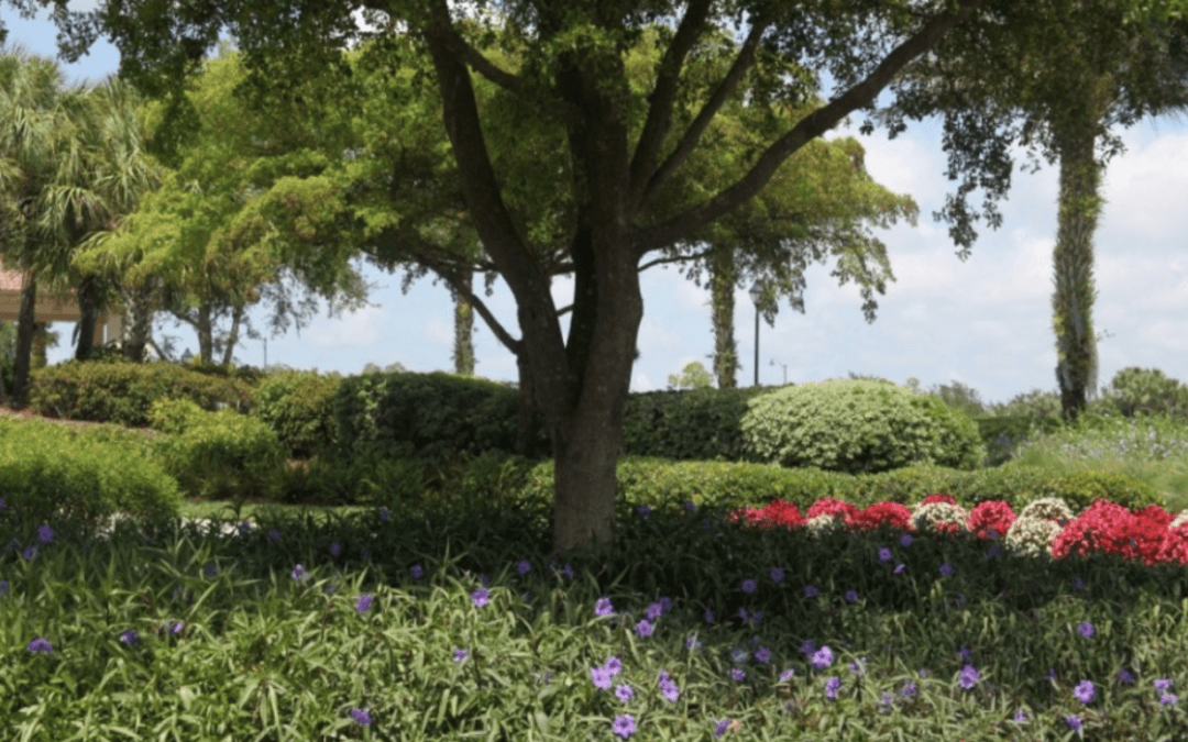 Why Rejuvenation Pruning is Important