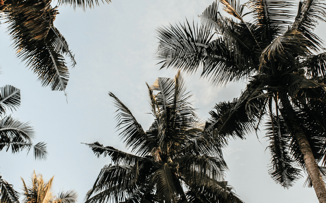 How to Avoid Palm Disease on Your Property (LBD)